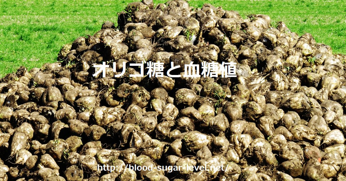オリゴ糖の原料になるビート、甜菜(てんさい)の収穫