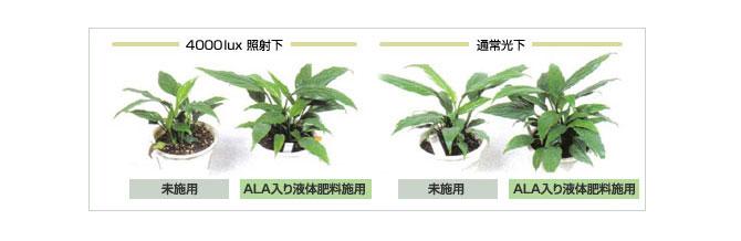 ALAが植物に与える効果